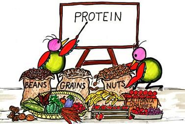 protein2-e1422985312832.jpg
